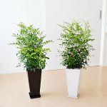 初心者におすすめ!格安の観葉植物でお部屋をおしゃれにしましょうのサムネイル画像