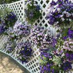 庭のガーデニングにも最適、デザインラティスを花で彩ろう。のサムネイル画像