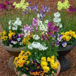 ガーデニングって楽しい!素敵な寄せ植えの作り方【Gardening】のサムネイル画像