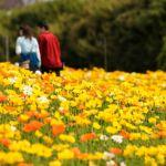 春爛漫!ココロうきうきカラダも弾む3月の楽しいデートご紹介!のサムネイル画像