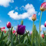 花がたくさん咲いている5月!いろいろなお花をあつめてみました!のサムネイル画像