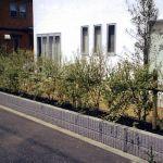 プライバシーを守ろう!目隠しになる庭木をいろいろご紹介!のサムネイル画像