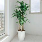 インテリアにもギフトにもおすすめ 人気の造花観葉植物は?のサムネイル画像