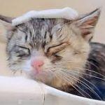 実は怖いお風呂の水垢!身近なアイテムで簡単にやっつけちゃおう!のサムネイル画像