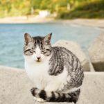 たまにはまったり。写真家・岩合光昭の撮った猫に会いに行こう!のサムネイル画像