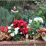 赤と緑のコントラストが素敵!クリスマスに楽しむ素敵な寄せ植えのサムネイル画像