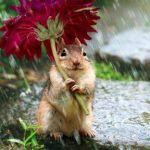 雨の日こそ思いやり。折りたたみ傘カバーはオトナ女子のマナーです☆のサムネイル画像
