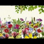 【趣味の園芸】活かせる情報の豊富さで選ぶならこのガーデニング番組のサムネイル画像