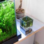 小さい水槽でプリアクアリウムを楽しもう!インテリア性も抜群。のサムネイル画像