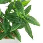 運気がアップする観葉植物、パキラの剪定方法や挿し木のやり方は?のサムネイル画像