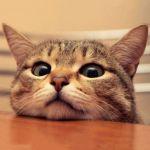 猫好きには堪らない!外でも家でも可愛い猫ちゃんの××雑貨のサムネイル画像