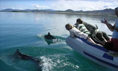 「イルカにあえるかも!?」テニア島日帰りツアー