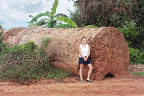 倒れたバオバブに座る女性