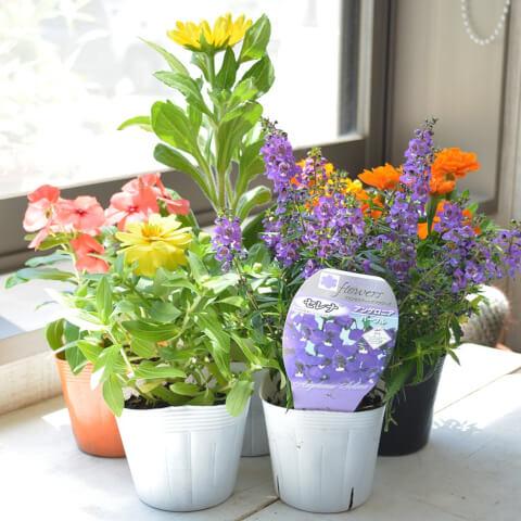 gardening-flower