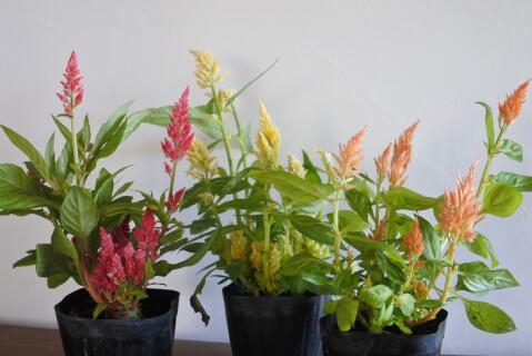 gardening-keitou