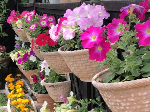 ガーデニング プランター 花