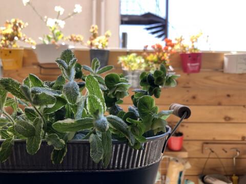 ガーデニング 植木鉢カバー