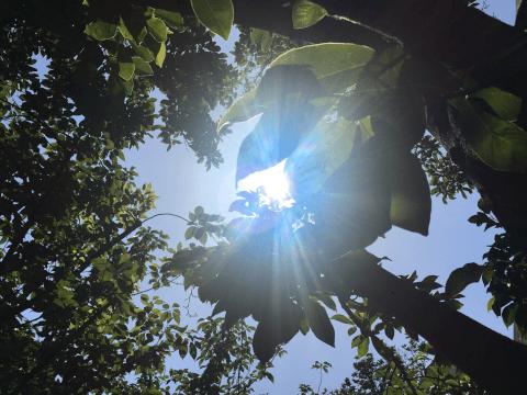 ヘアワックス プロダクト 直射日光