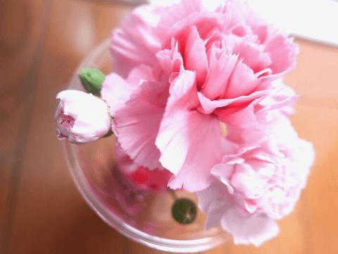 花言葉 カーネーション