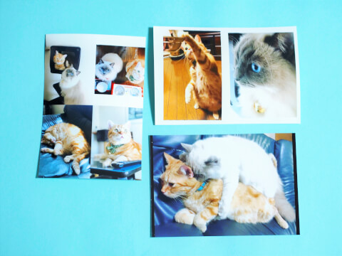 印刷した写真の画像