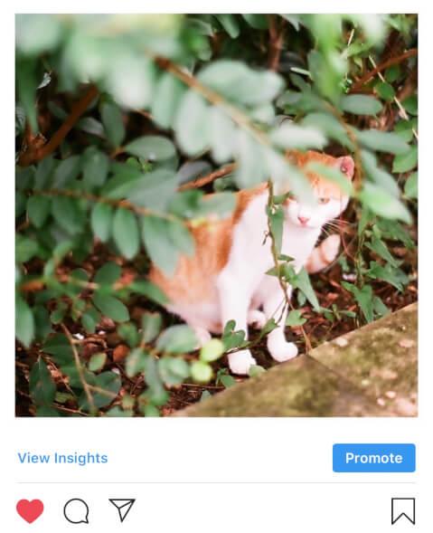 インスタグラム 投稿 猫 ネコ ハッシュタグ