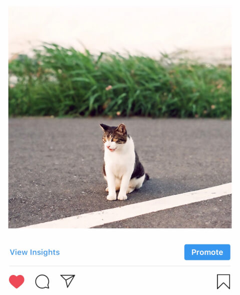 インスタグラム ハッシュタグ 愛猫 猫 ねこちゃん