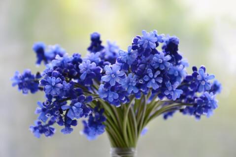 青い小さなお花