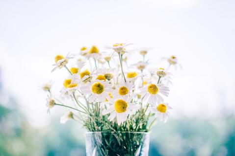白い花の写真