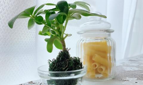 観葉植物 保存瓶 ナチュラルキッチン