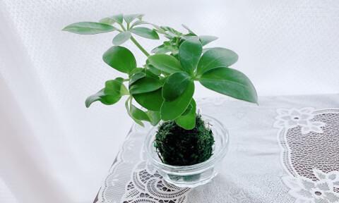 観葉植物 ナチュラルキッチン