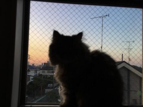 猫コスメ_猫
