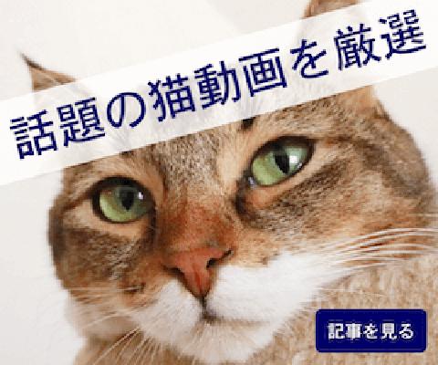 話題の猫動画を厳選