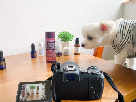 写真 撮影 カメラ