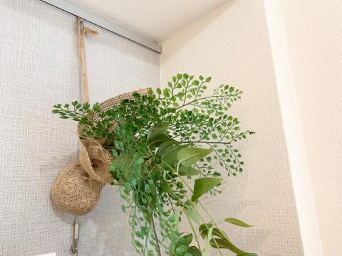 ピクチャーレール  植物