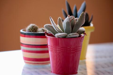 小型 サボテン 育て方 種類 花 とげ 植え替え おすすめ 人気 インテリア