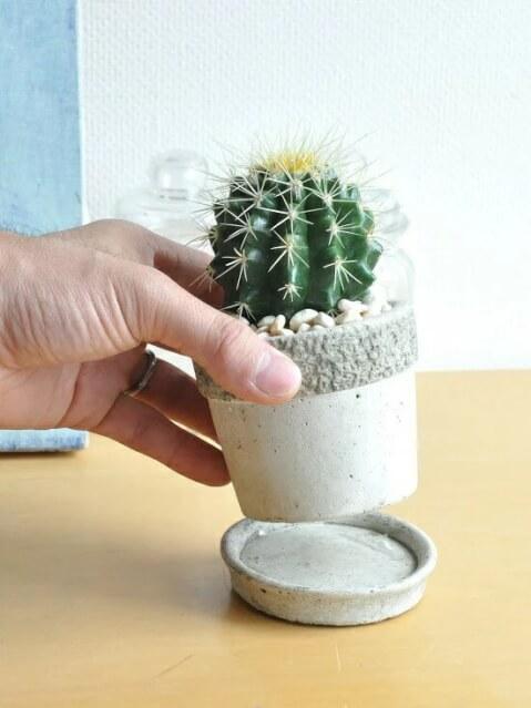 育てやすい サボテン 育て方 種類 花 とげ 植え替え おすすめ 人気 インテリア