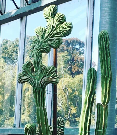 大型 サボテン 育て方 種類 花 とげ 植え替え おすすめ 人気 インテリア