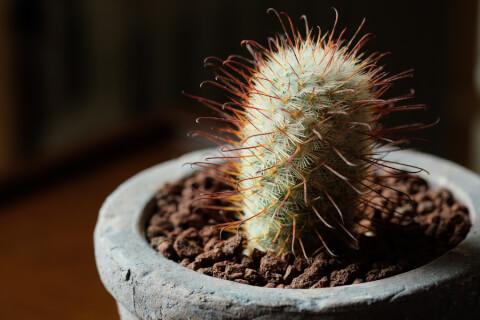 虫 害虫 サボテン 育て方 種類 花 とげ 植え替え おすすめ 人気 インテリア