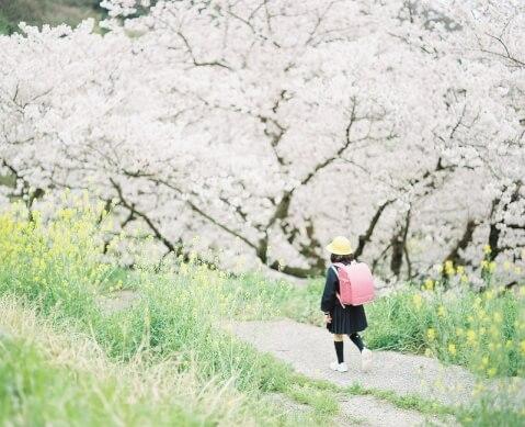 桜並木 少女 エモい
