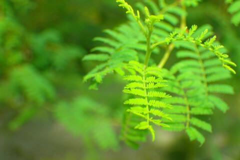シダ植物 ファーンブロック