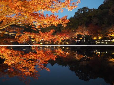写真  構図 二分割構図 風景 池 紅葉