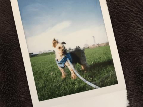 チェキ 愛犬