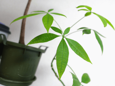 病人 鉢植え 花 花言葉