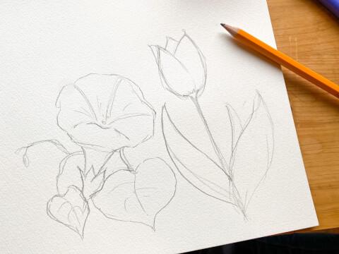 鉛筆画 イラスト チューリップ 朝顔 花