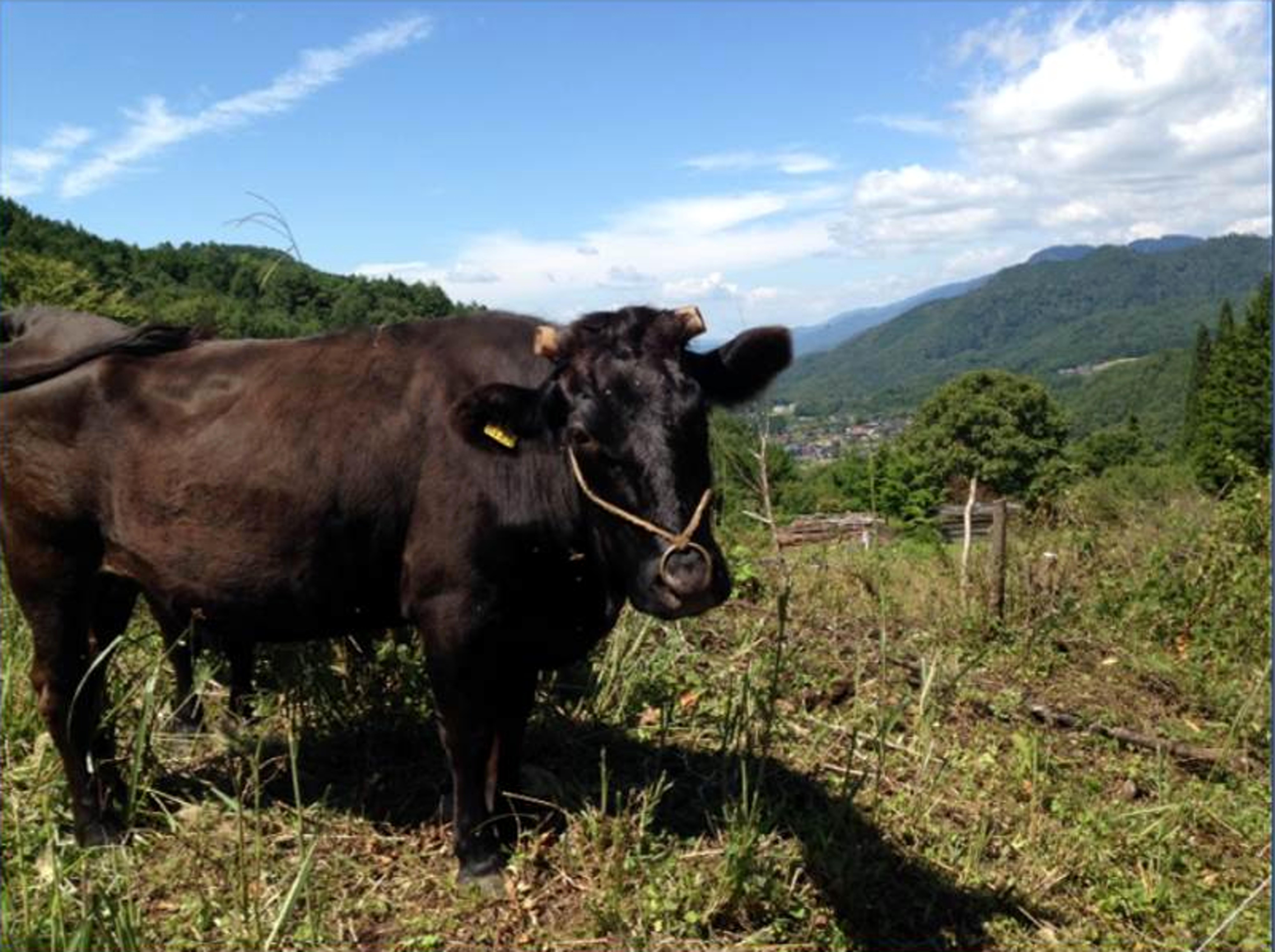 銘選木曽牛ロースと開田高原とうもろこしスープのセット