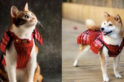 【Cool Japan】讓人忍不住喊聲「貓殿下」、「狗殿下」…! 貓狗專用「寵物鎧甲」超可愛超帥氣