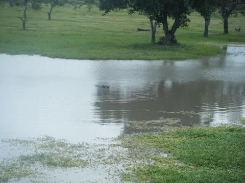 Kruger National Park 4