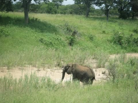 Kruger National Park 5