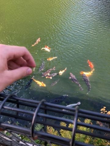 鯉(2度目)