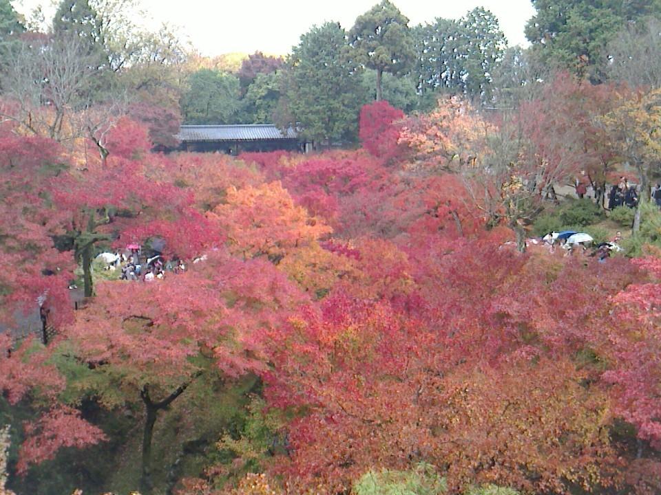 通天橋から見た景色